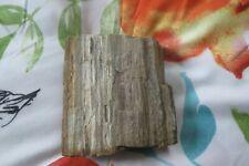 Oklahoma Petrified Wood Fossil Rough /Raw small  Slab 1lbs 4.3oz.