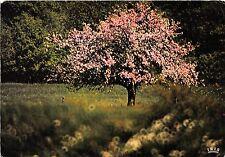BR13542 Image du Printemps arbress tree  france
