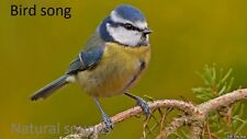 BIRD SONG CD GREAT RELAXATION~~~SLEEP AID NATURAL SOUNDS CD