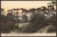London. Camden. Hampstead Heath, Top of the Drive. Unused Vintage LL Postcard