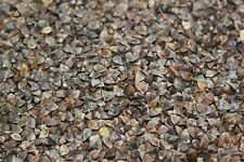 10 Lb. Buckwheat Food Plot Wildlife Seed, Ducks, Geese, Quail, Other Wildlife