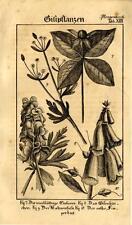 1829 REBAU ENGRAVING paris herb, monk's hood, buttercup, purple foxglove