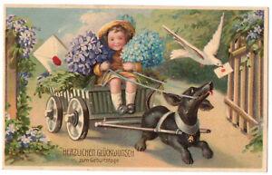 Präge Ak Blumengruss Dackel Kutsche Geburtstag um 1910 !