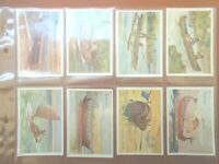 1929 Sarony SHIPS OF ALL AGES sail boat set of 50 Tobacco Cigarette larger cards