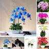 100Pcs Orchid Seeds Flower Plant Office Home Ornament Garden Window Bonsai Decor