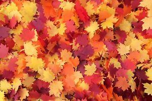 Autumn Leaf Biodegradable Confetti Fall Maple Leaves Orange Yellow Red 1L Eco
