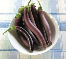 40 Chinese Long Purple Eggplant Seeds  Beautiful Garden Plant Non GMO Heirloom