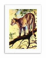 PUMA COUGAR MOUNTAIN LION CAT Poster Painting Canvas art Prints