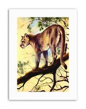 Puma Cougar Puma Cat POSTER dipinto su tela art prints