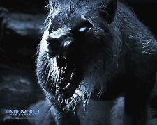 UNDERWORLD EVOLUTION 8X10 PHOTO PICTURE PIC LYCAN ELDER WILLIAM