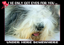 OLD ENGLISH SHEEPDOG VALENTINE MOTHERS DAY BIRTHDAY CARD - PERSONALISED INSIDE