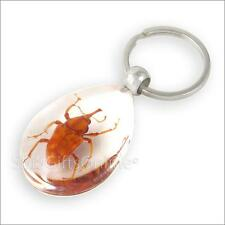 Clear Acrylic Amber Cyrtotrachelus Longimanus Beetle Keyring Insect Keychain