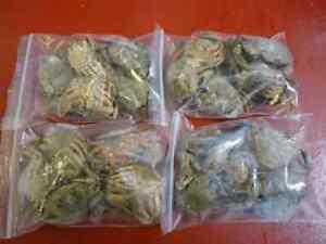 Frozen Crab - 10 Packets - Sea Fishing Frozen Dead Bait