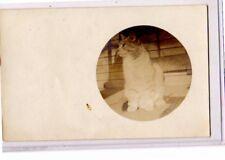 Real Photo Postcard RPPC - Animal - Cat on Porch