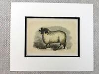1853 Antik Aufdruck Heath RAM Pedigree Schaf Rasse Original Viktorianisch Kunst