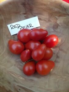 Red Pear Tomato - 10+ seeds - Semillas - Graines - Samen