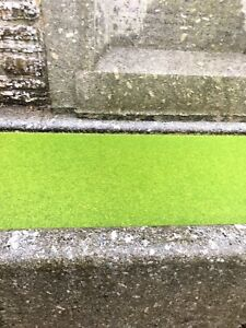 100g LEMNA MINOR PLANTS DUCKWEED SURFACE PLANT POND FOOD WILDLIFE COLD TROPICAL