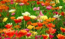 100 Seeds California Poppy Mix Flowers New Crop Garden Planting