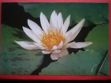 POSTCARD WATER LILY