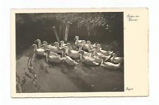 """AK / Fotokunst BEGRO / """" ENTEN IM WASSER """" ( Bild 2 ) / 30er Jahre"""