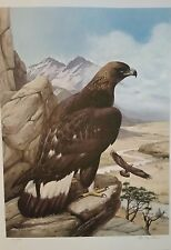 Golden Eagle by Roger Tory Peterson