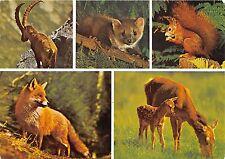 BF39597 fox renard cerf deer ecureuil squirrel france alpes  animal animaux