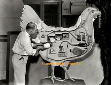 1921 Science Egg Production Display Model Photo