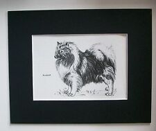 Keeshond Dog Print Gladys Emerson Cook Bookplate 1962 8x10 Matted Adorable