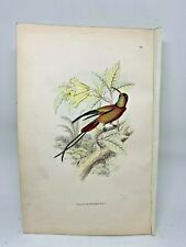 DELUXE ED Hand-colored Plates 1840 Jardine History Hummingbirds #24 Topaz Throat