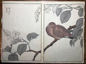 Japanese Woodblock Print Maekawa Bunrei Birds of Japan Large bird in tree #22