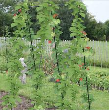 Outdoor Garden Steel Plant Runner Bean Pea Support Frame Stand Grow Poles Pole