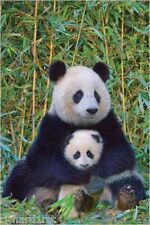 Jigsaw puzzle Animal Wild Panda Bear and Baby 1000 piece NEW made in USA