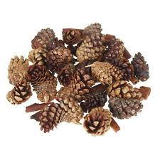Dried Scented Pine Cones Natural Forms, 18-Piece
