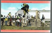 1982 Bronco Busting Postcard M92
