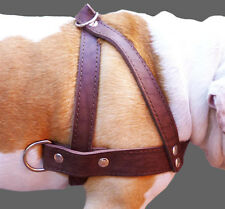 "Genuine Leather Dog Pulling Harness 1.5"" wide, 35""-39.5"" chest for Large XLarge"