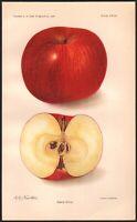 1906 Rabun Apple Antique Color Lithograph Original Kitchen Print A.A. Newton