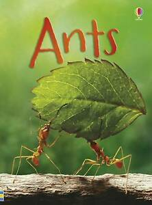 Brand New Usborne Beginners: Ants by Lucy Bowman