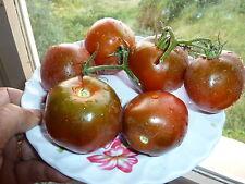 15 graines semences Tomate Noire de Crimé Tomaten  Seeds expédition GRATUITE