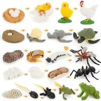 Simulation Animals Life Animals Cycle Growth Model Figures Toy Figurines G2U1