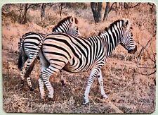Two Walking Zebras Full Deck Playing Cards New & Original 52+2 Jokers L@K!*