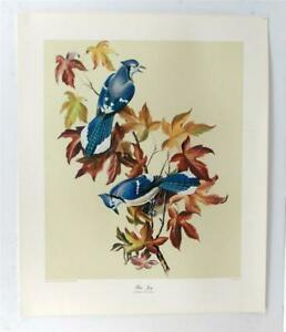 Vintage ANTHONY LA PAGLIA Blue Jay Birds Realism Animals Print Lithograph #Z350