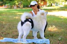Dog Season Diaper Heat Pants - Dog Nappy Incontinence Pants for Dogs Dog Pants