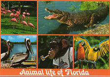 postcard   USA   Animal life of Florida unposted