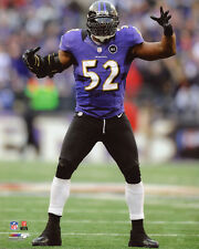2013 Baltimore Ravens RAY LEWIS Glossy 8x10 Photo NFL Football Print Poster