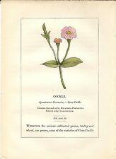 Stampa antica PIANTE DELLA BIBBIA AGROSTEMMA CORONARIA 1842 Old antique print