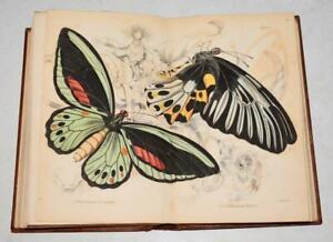 James Duncan Entomology Foreign Butterflies Lizars 1843 WITH 32 Coloured Plates