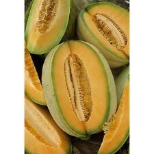 Hales Best Jumbo Cantaloupe *Heirloom* Non-GMO (50 Seed's)