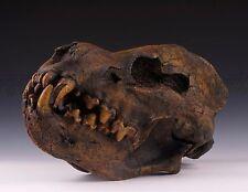 NEW Handmade Resin Replica 1:1 Giant hyena Skull Model Anatomy