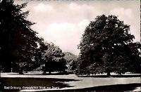 Bad Driburg Westfalen Teutoburger Wald 1959 Kurpark Parkanlage Iburg Baum s/w AK