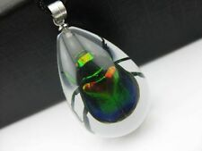 12 pc Real Scarab Beetle in clear resin Pendant Necklace China Insect free ship